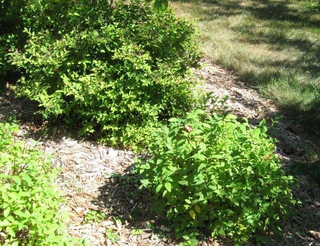 Big bush little bush