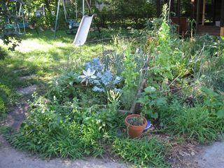 Kate's garden 10 1