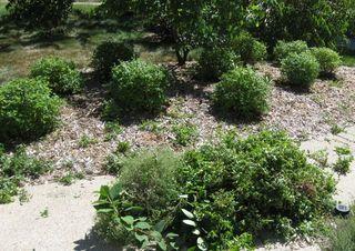 Finished bushes