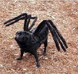 Halloween_dog_spider