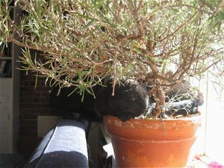 Potted cat 2