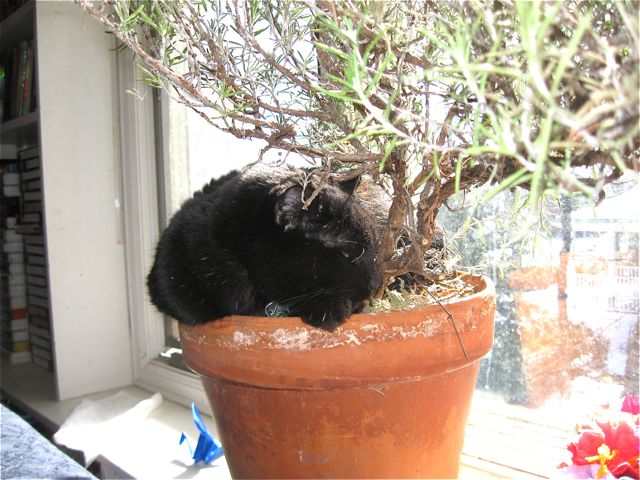 Potted cat 3
