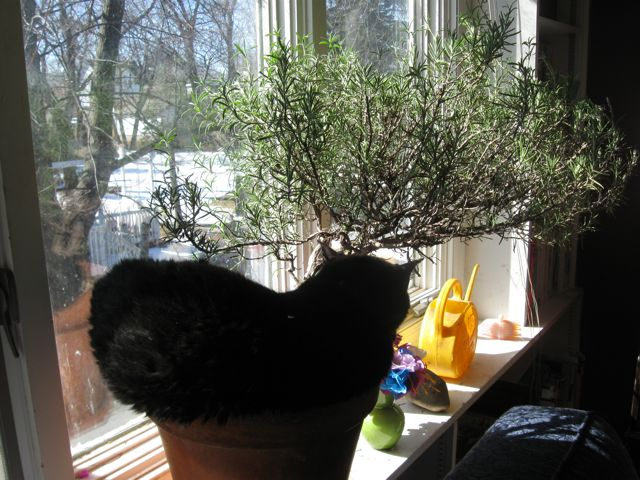 Potted cat 1