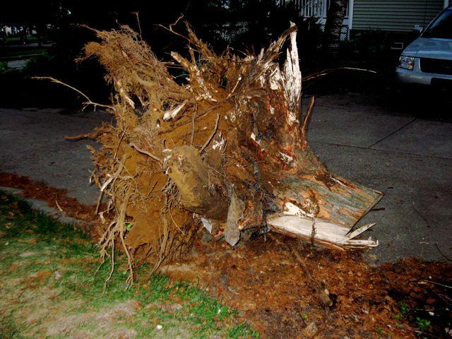 Stump pulled 1