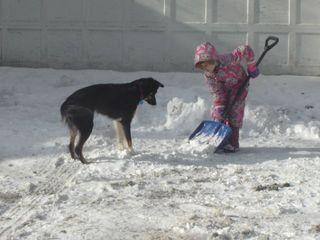 Lyra look at shovel