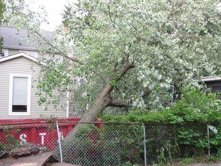 Concrete tree 3