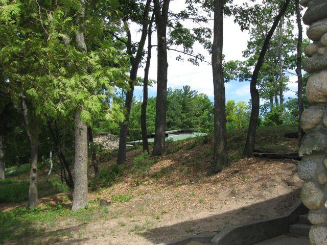 Interlochen Dana's trees