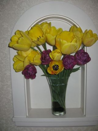 Yellow tulips opening