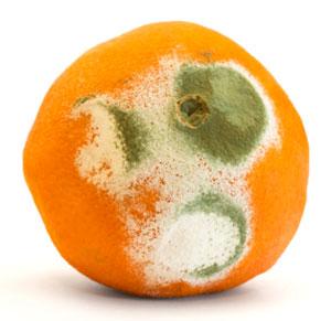 Moldy-orange